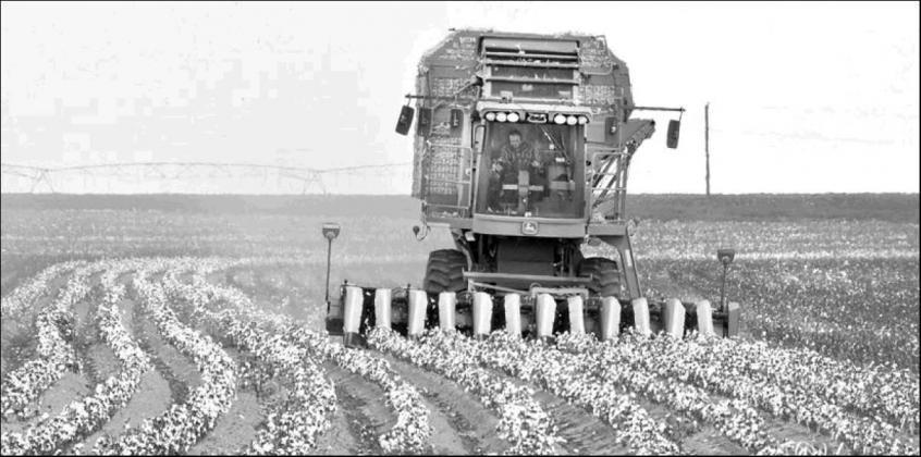 Cotton harvest getting underway