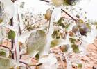 Ice deals another blow to local crop situation